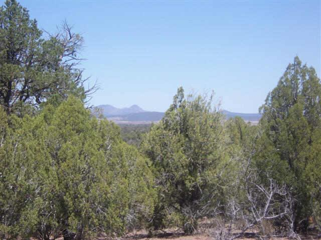 86 N Quibits Creel Trail, Ash Fork AZ 86320 - Photo 2